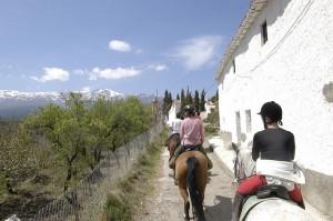 cheval en andalousie