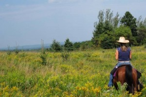 rando cheval canada