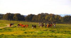 rando equestre espagne