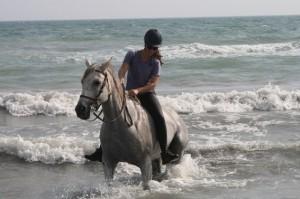 sejour a cheval camargue