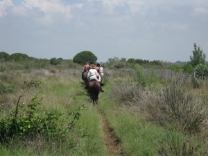 HORSE RIDING IN CAMARGUE