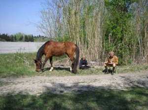 stage cheval camargue