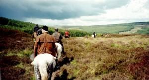 cheval en irlande