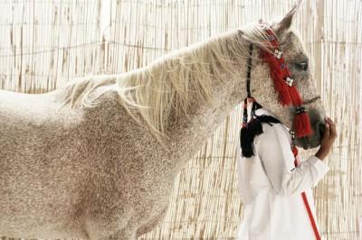 Randonnée à cheval Emirats Arabes unis- Abu DHABI Desert Ride