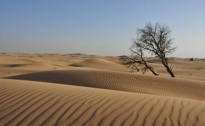 Voyage à cheval désert Emirats Arabes unis- Abu DHABI Desert Ride