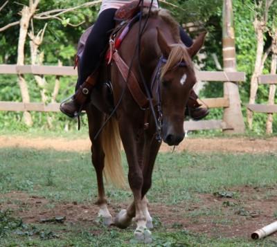 randonnee cheval republique dominicaine