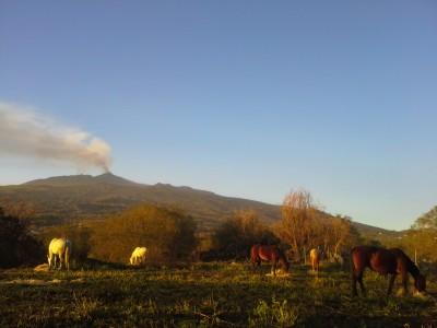 randonnee a cheval etna sicile