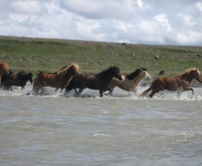 islande a cheval