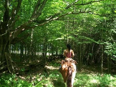 Randonnée à cheval au QUEBEC, chevauchée authentique au Québec, forêt