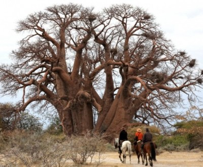 safari cheval botswana