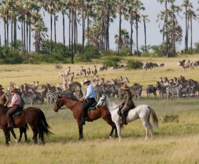 safari a chevak kalahari