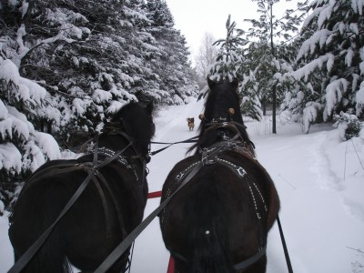 cheval au quebec
