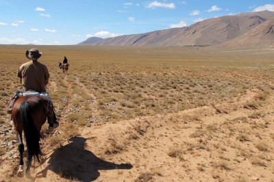 cheval au maroc