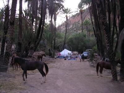 voyage a cheval maroc