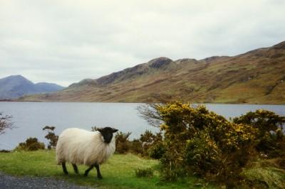 randonnee equestre irlande