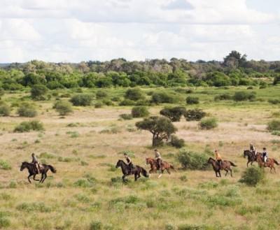 safari cheval