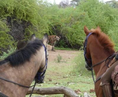 safari equestre