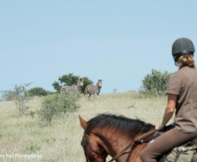 cheval safari