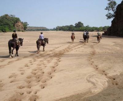 safaris a cheval