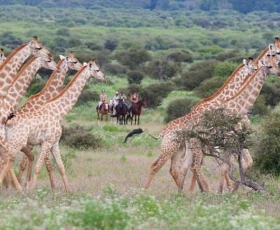 safari equestre afrique du sud