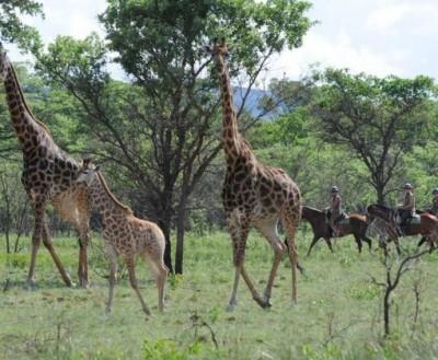 safari a cheval en afrique du sud