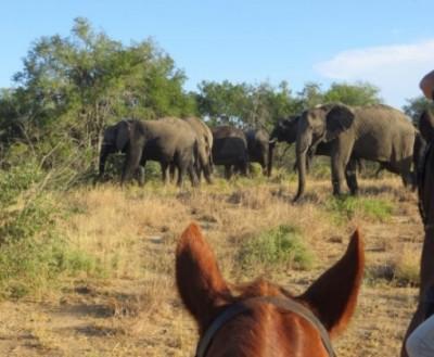 safari cheval afrique