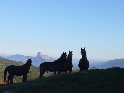 trek a cheval en sicile