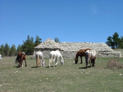 rando a cheval provence