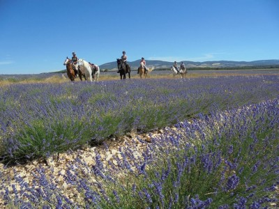 horseback trail ride in provence