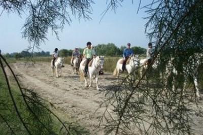 randonnee a cheval en camargue