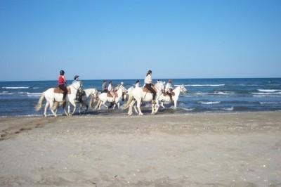 Randonnee a cheval CAMARGUE : 3 JOURS RANDONNEE EQUESTRE DECOUVERTE DE LA CAMARGUE