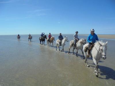 randonnee a cheval en provence camargue