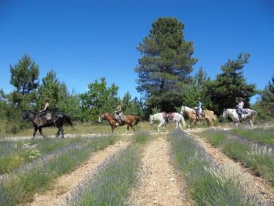 randonnee a cheval vaucluse