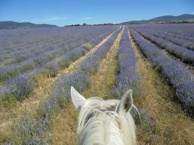 sud de la france a cheval