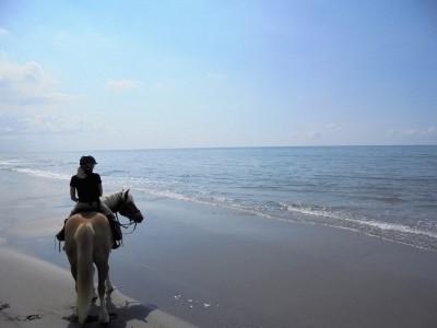 rando cheval camargue