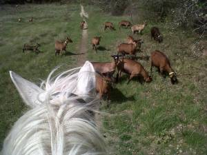 week end a cheval dans le luberon