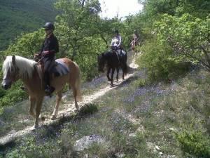 initiation a la randonnee equestre luberon
