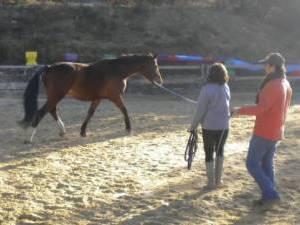 Stage Relation Cheval - Cavalier : CAP RANDO' THOLOGIE