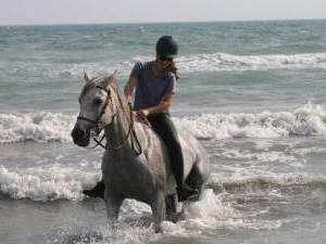 rando equestre en camargue