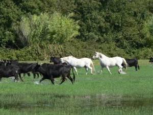 stage cheval en camargue