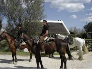 stage equitation en camargue
