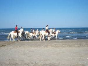 Randonnée à cheval CAMARGUE : WEEK END DE L'ASCENSION A CHEVAL EN CAMARGUE