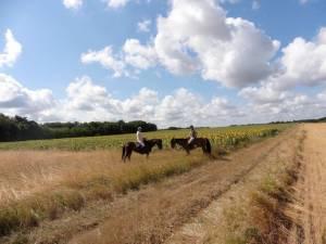 randonnee equestre saumur