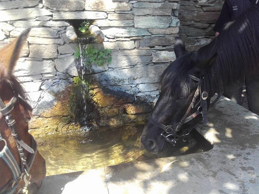 Randonnee Equestre en CORSE : LE CAP CORSE A CHEVAL