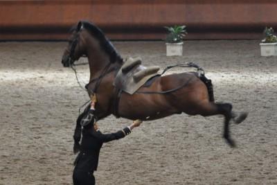 voyage a cheval chateaux de la loire