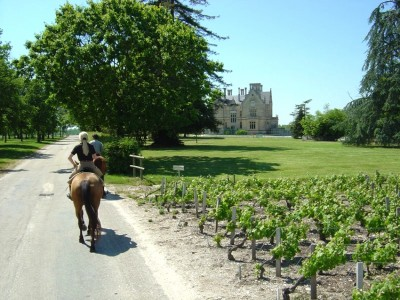 horse riding bordeaux wine