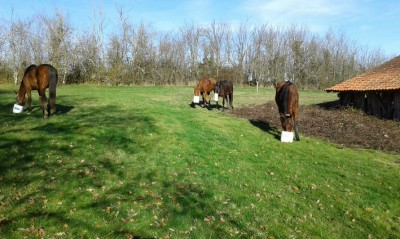 randonnee a cheval perigord