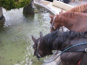 la provence a cheval