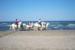 vacances a cheval en camargue
