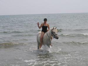 plages de camargue a cheval